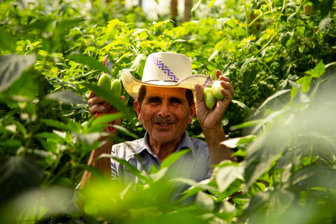 """El Salvador: Att odla """"grönt guld"""" i Centralamerikas torra korridor"""